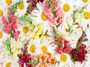 Margaritas blancas y otras flores aportando color