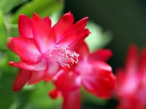 Elegante flor con largos estambres