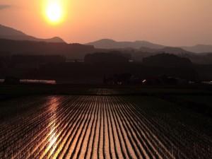 Postal: Atardecer en un campo de cultivo
