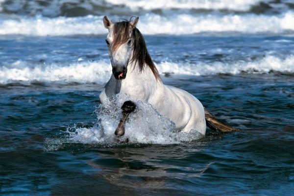 Caballo trotando en el agua