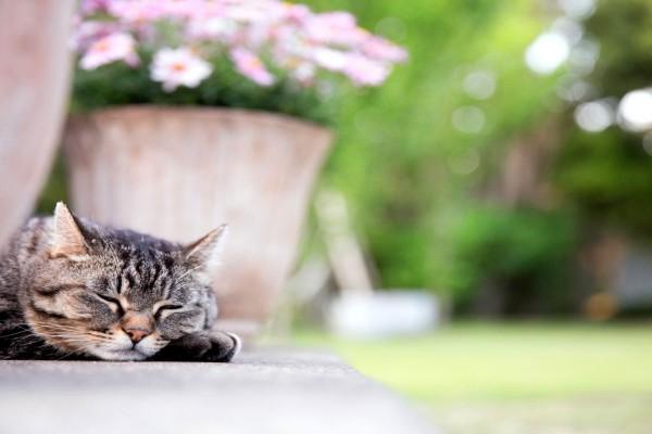 Un gatito durmiendo junto al jardín