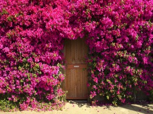 Postal: Flores en la puerta de una casa