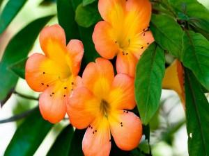 Flores con pétalos naranjas en una planta