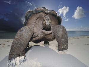 Gran tortuga en la arena