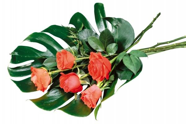 Formando un ramo con rosas y una gran hoja