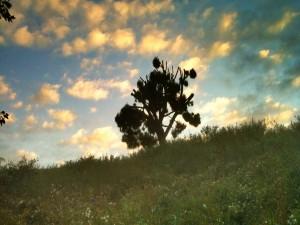 Postal: Un árbol en lo alto de la colina