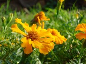 Postal: Flores amarillas sobre la hierba