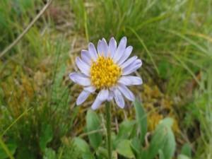 Una flor solitaria