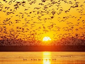 Postal: Aves en el agua y el cielo al atardecer