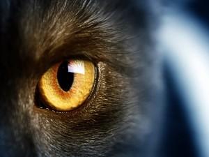 Postal: El ojo de un gato