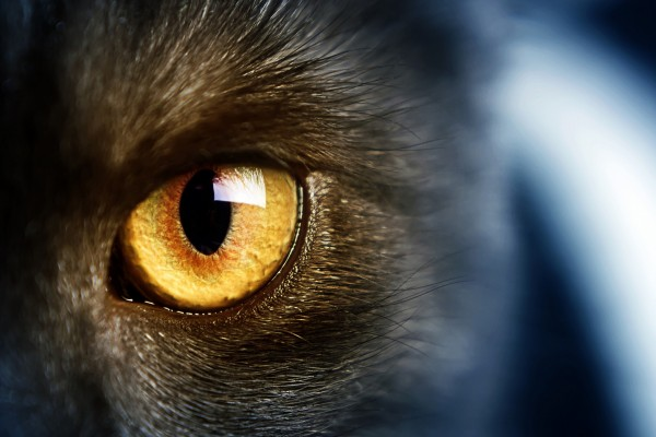 El ojo de un gato