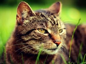 Postal: Cara de un gato en primer plano