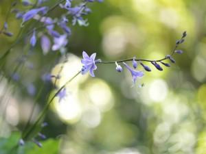 Ramas con flores color pùrpura