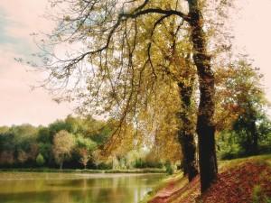 Postal: Lago y árboles en otoño