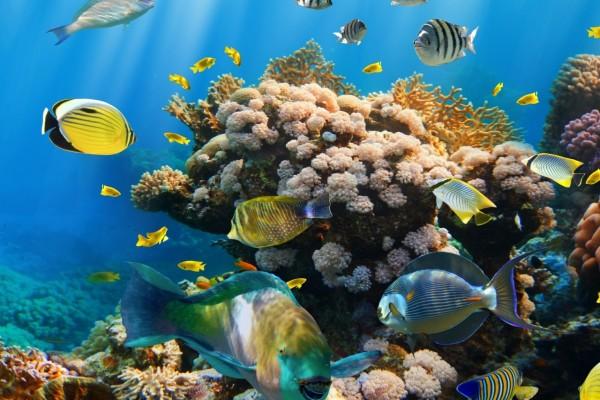 Peces de colores en el mar