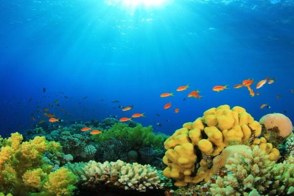 Corales y peces en el fondo del mar