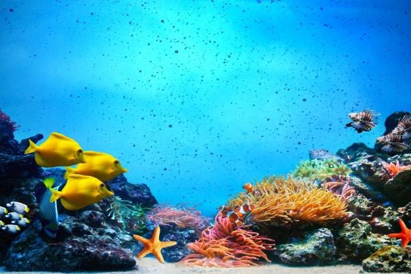 Peces, anémonas y estrellas bajo el mar