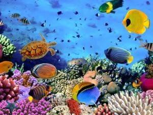 Impactante vista del fondo del mar