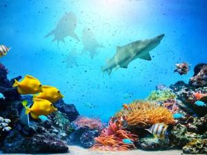 Postal: Tiburones en el fondo del mar