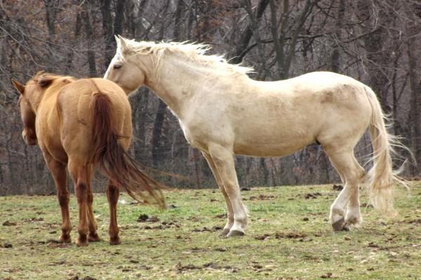 Dos caballos juntos en el pasto