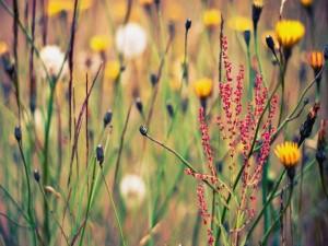 Postal: Florecillas en la naturaleza