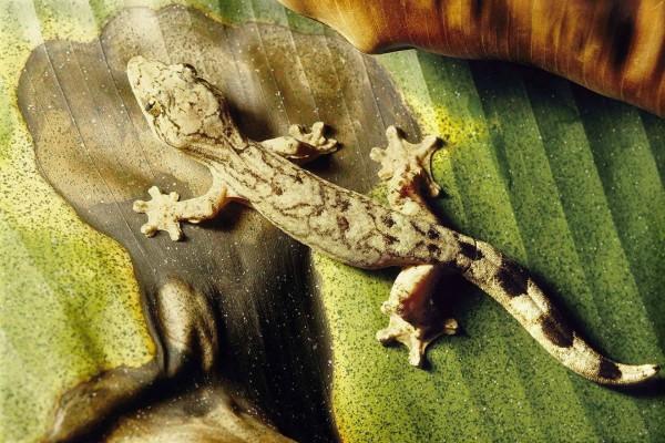 Un lagarto sobre una hoja