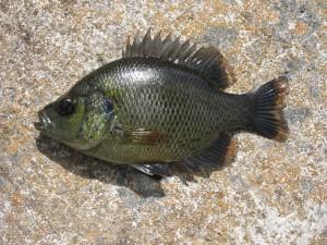 Postal: Un pez sobre la roca