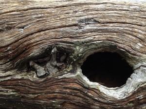 Agujero en el tronco