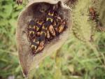 Insectos agrupados