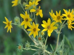 Flores silvestres de color amarillo