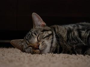 Postal: Un gato dormido sobre la alfombra
