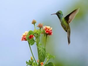 Un colibrí volando cerca de unas flores