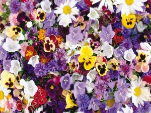 Flores de diversas familias y colores