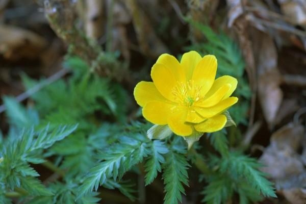 Una solitaria flor amarilla en la planta
