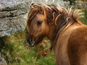 Perfil de un bonito caballo marrón