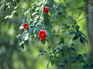 Flores rojas en la rama de un árbol