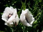 Flores blancas en una planta con pinchos