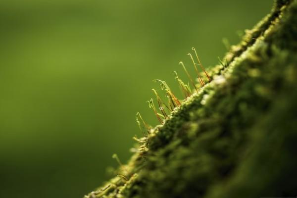 Varios brotes verdes