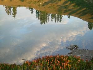 El paisaje reflejado en el agua
