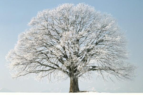Un bonito árbol con nieve en sus ramas
