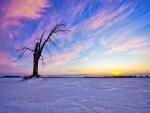 Un árbol sin hojas y con pocas ramas en una explanada nevada