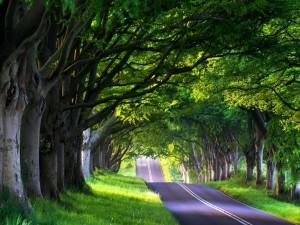 Postal: Árboles a ambos lados de la carretera