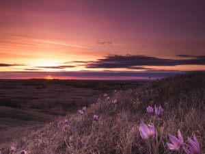 Anochece en un campo con flores