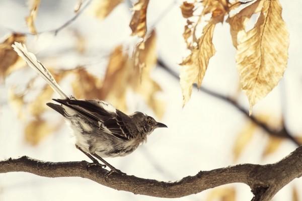 Hermoso pájaro sobre una rama