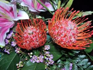 Flores exóticas en la naturaleza