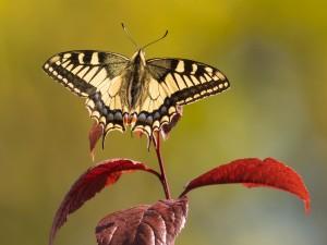 Postal: Mariposa sobre una hoja