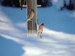 Comedero para pájaros en la nieve