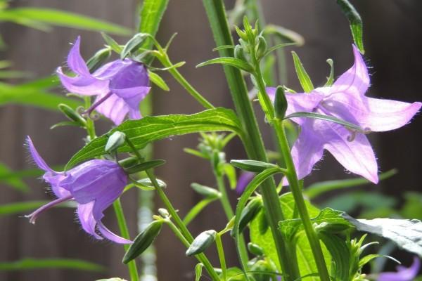 Planta con hojas verdes y flores lilas