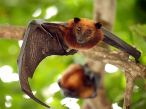 Postal: Murciélago en una rama