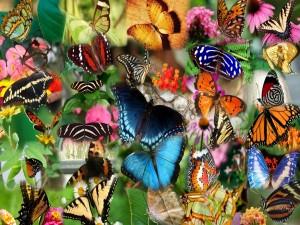 Collage de mariposas multicolor